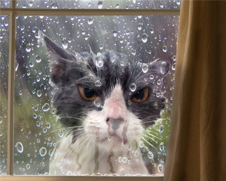 Angry Wet Cat