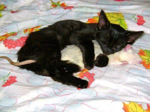 Will Sleep With Anyone Cat