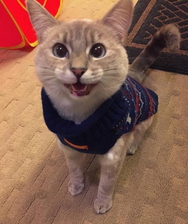 Mr. Rogers Cat